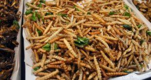 Каких червей можно официально употреблять в пищу?
