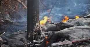 Как горят деревья под воздействием лавы? Это выглядит необычно