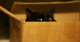 Почему кошки любят сидеть в коробках?