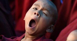 Почему люди зевают? Есть несколько интересных теорий